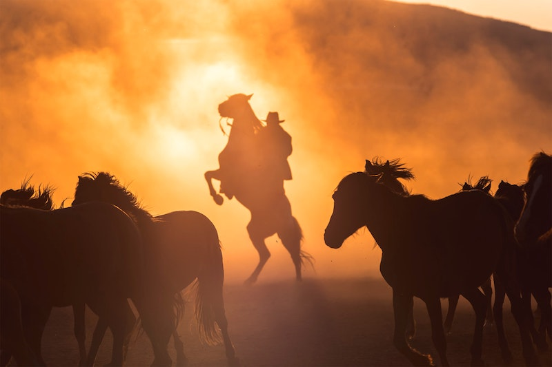 Trope Rec Tuesday: Diverse Cowboy Romances To Read After A Cowboy to Remember