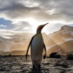 Why Writers Are Like Penguins by Hazel Prior