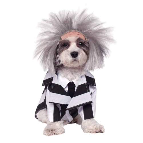 The Cutest Doggie Halloween Costumes You Will Ever See