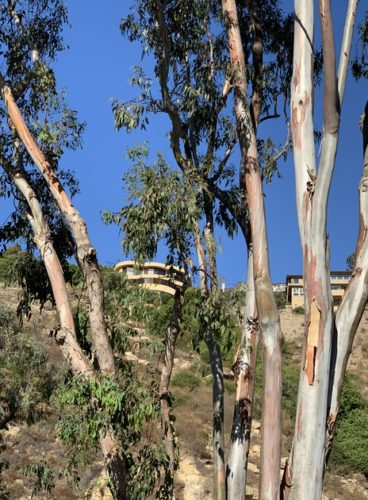 A house on a cliff seen between trees