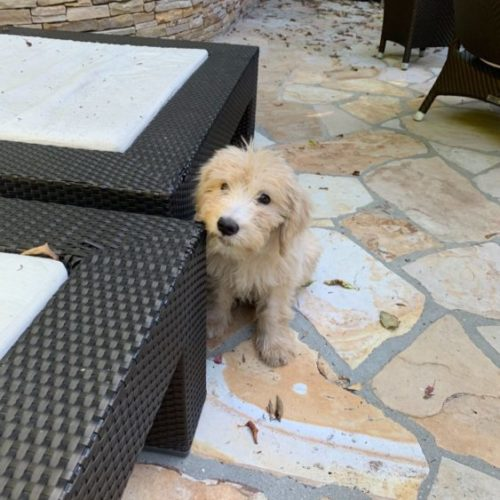 Daily Frolic: Lisa Got a Puppy and We're Obsessed