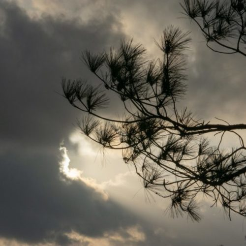 Silhouette of trees under cloudy sky