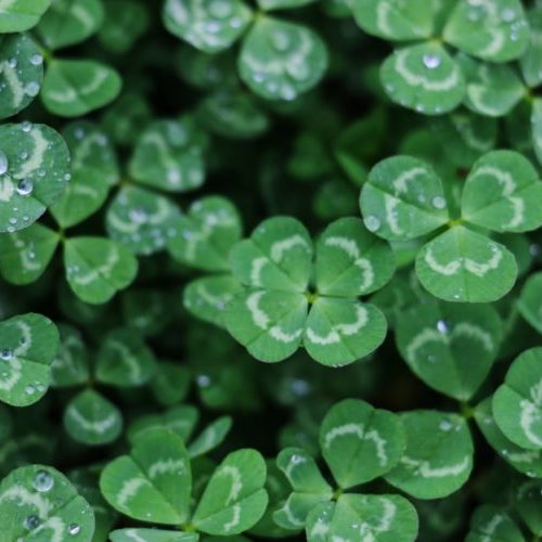 If you love St. Patrick's day, here are some great watches to get you in the spirit!